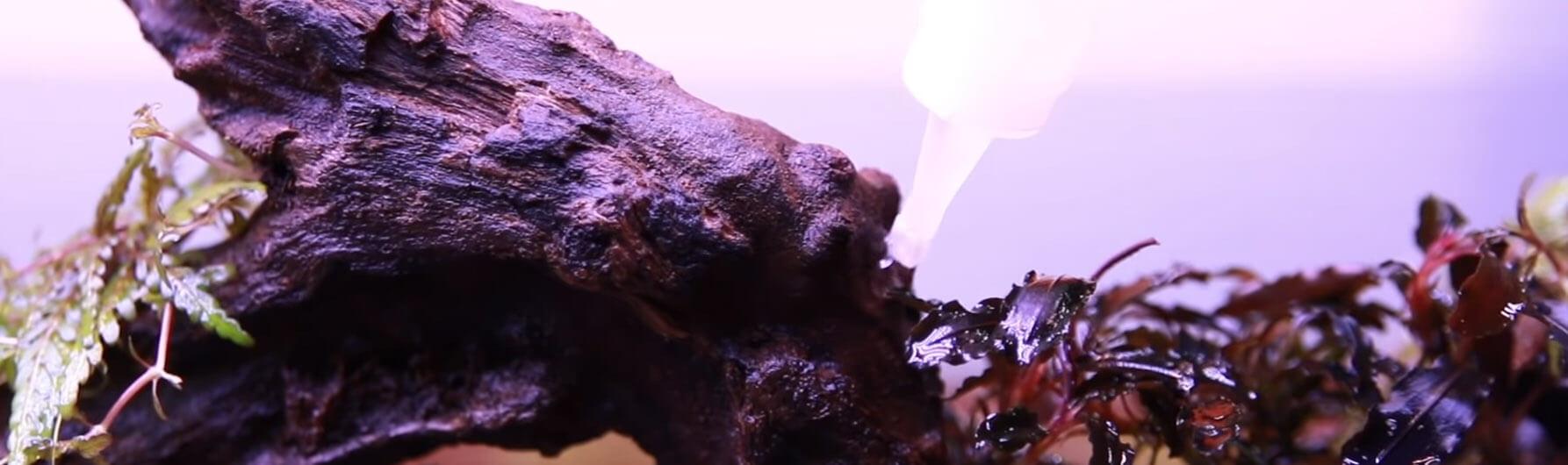 Как приклеить мох в аквариуме