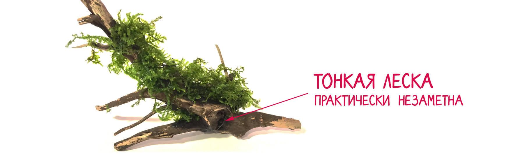 Как закрепить леской мох в аквариуме леской
