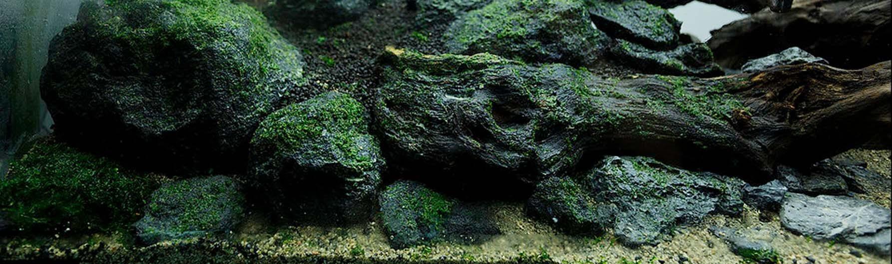Как прикрепить мох в аквариуме