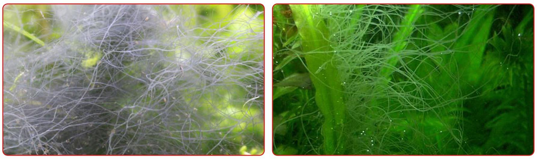 Олений рог на растениях в аквариуме