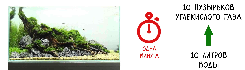Количество углекислого газа для аквариума