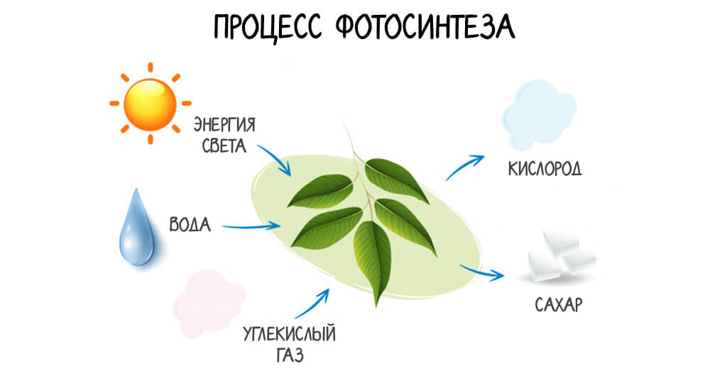 Фотосинтез в теплице