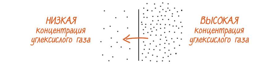 Пассивная диффузия Со2