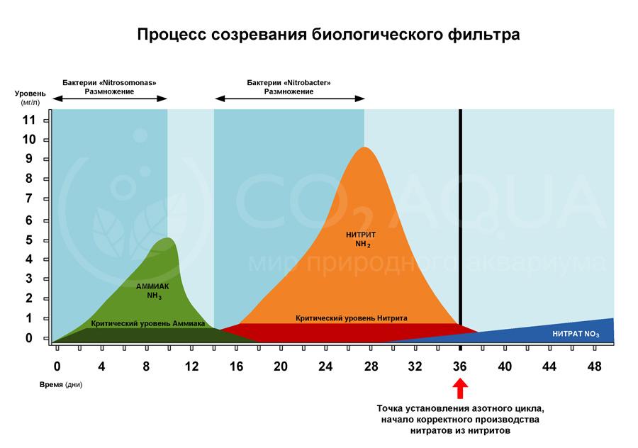 Процесс созревания азотного цикла