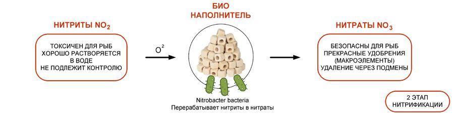 Нитрификация в аквариуме. 2 этап