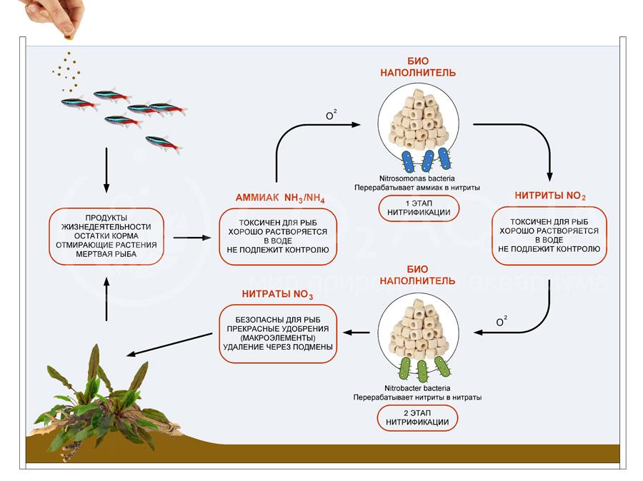 Азотный цикл в аквариуме